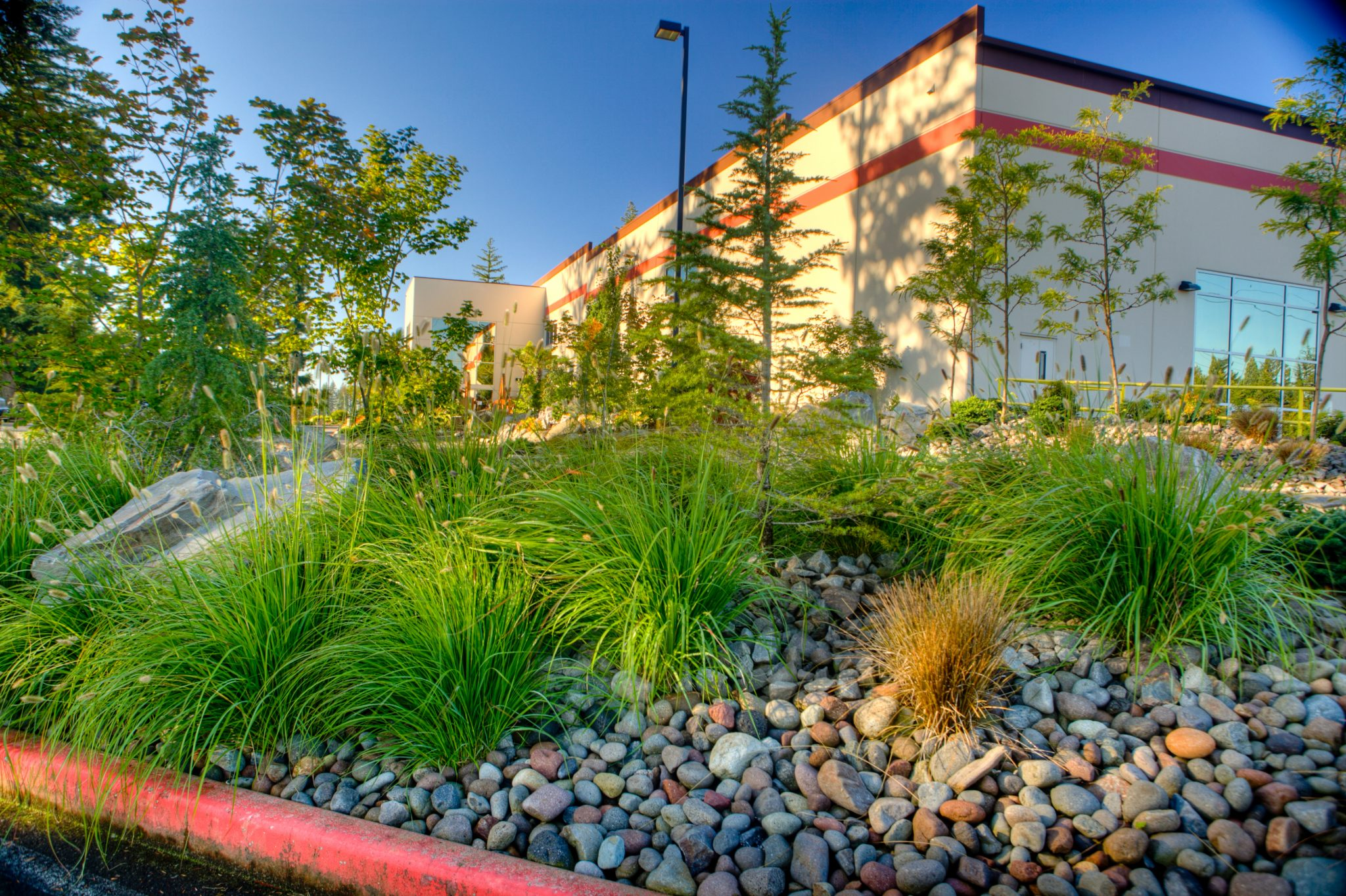 grass or shrubs for your commercial landscape print 081