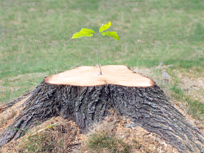 Image Result For Removing Tree Stump