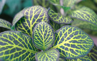 Taking Care Your House Plants During Winter