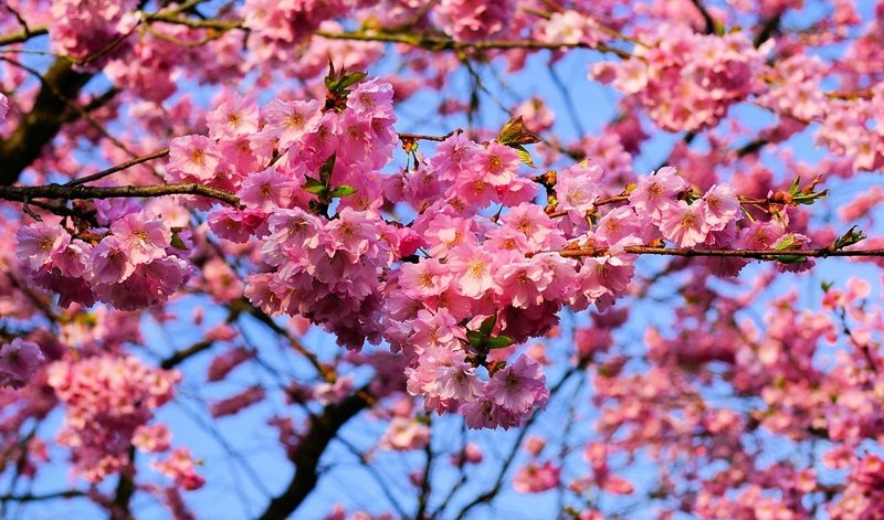 Landscaping With Spring Trees And Shrubs